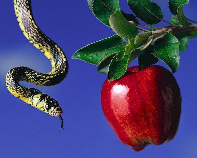 Uma imagem contendo animal, mesa, pequeno, maçã  Descrição gerada automaticamente